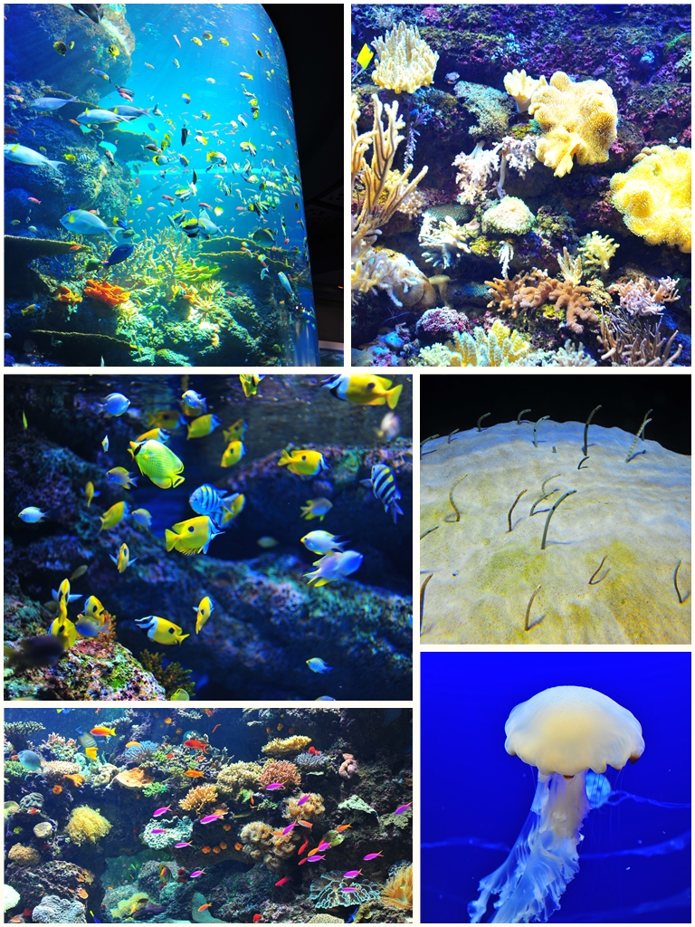 The SEA Aquarium at Resorts World Sentosa Photo credit: Fatherkao