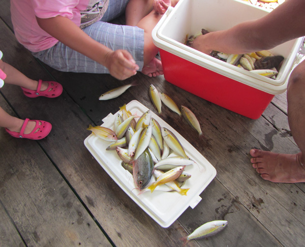 And this was how much that could be fished on a morning the boat took the fishing enthusiasts out deep sea