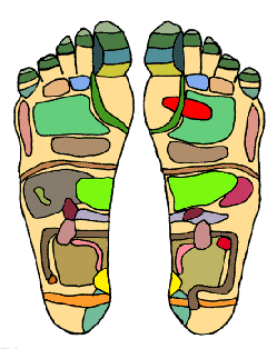 "Did you know that the areas of the feet correspond with organs in the ""zones"" of the body?"