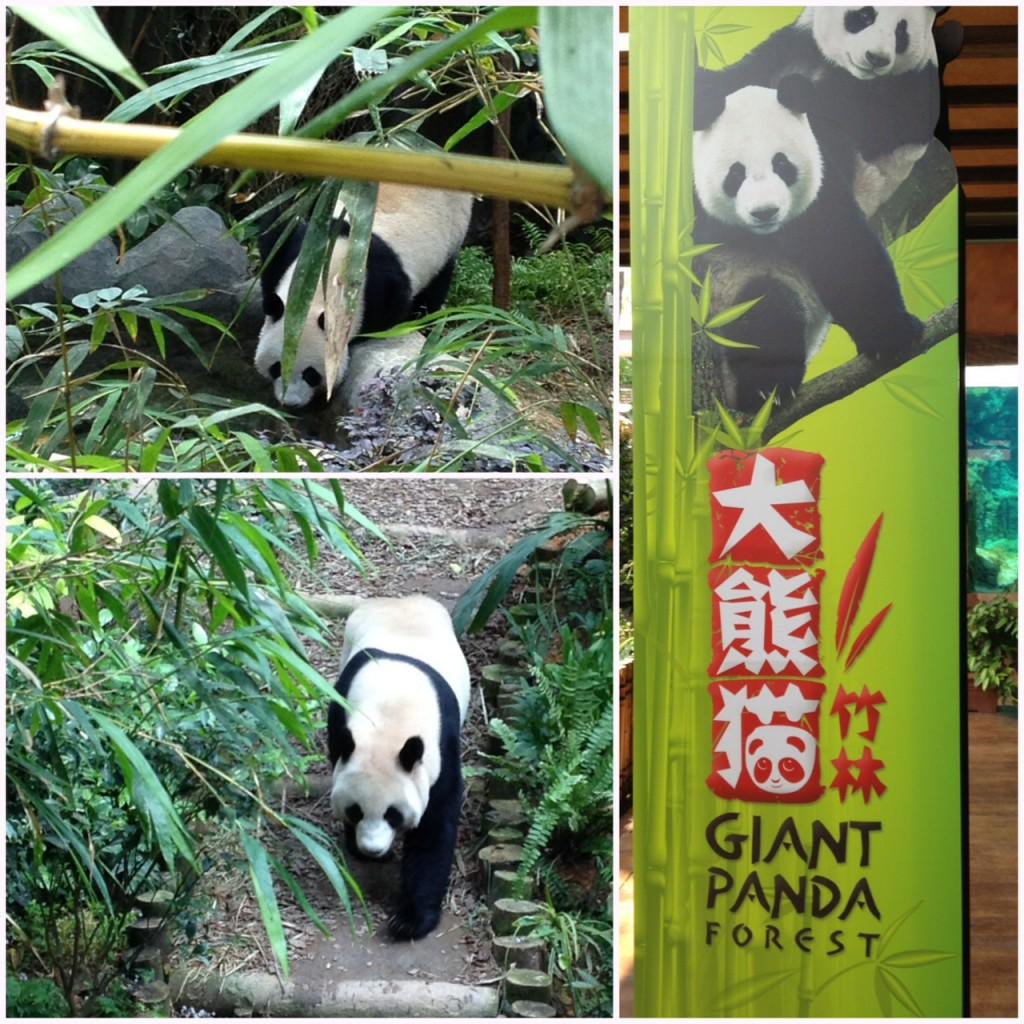 wwf panda forest - photo #8
